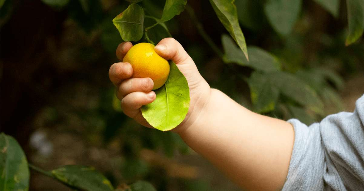 The Importance of Vitamin C for Your Child's Health